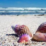 2020潮干狩り無料の鹿児島おすすめ穴場